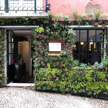 """Pavement jungle:"" the British entrepreneur making Lisbon's urban spaces greener"